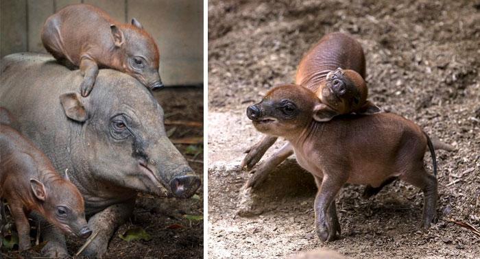 Малыши редких животных, которых вы, наверное, не видели