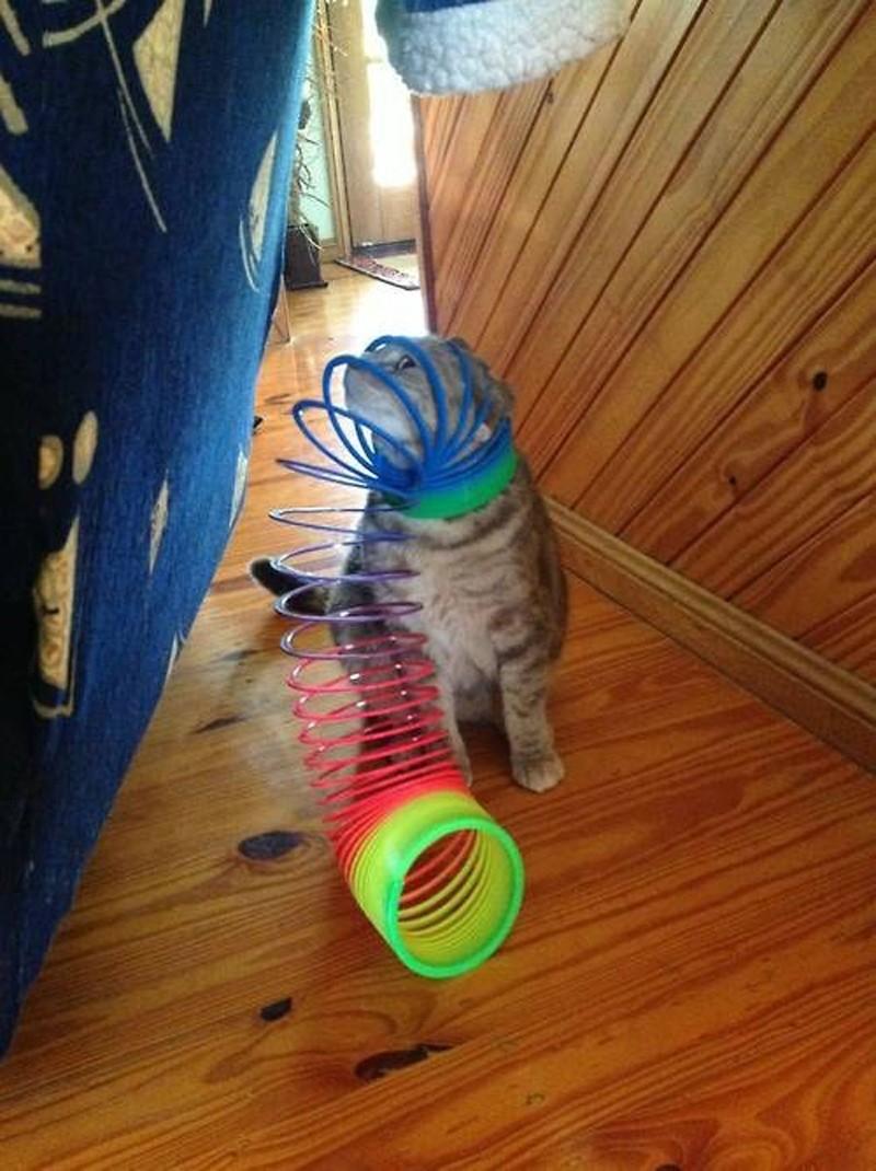 Забавные коты, которые застряли и встряли