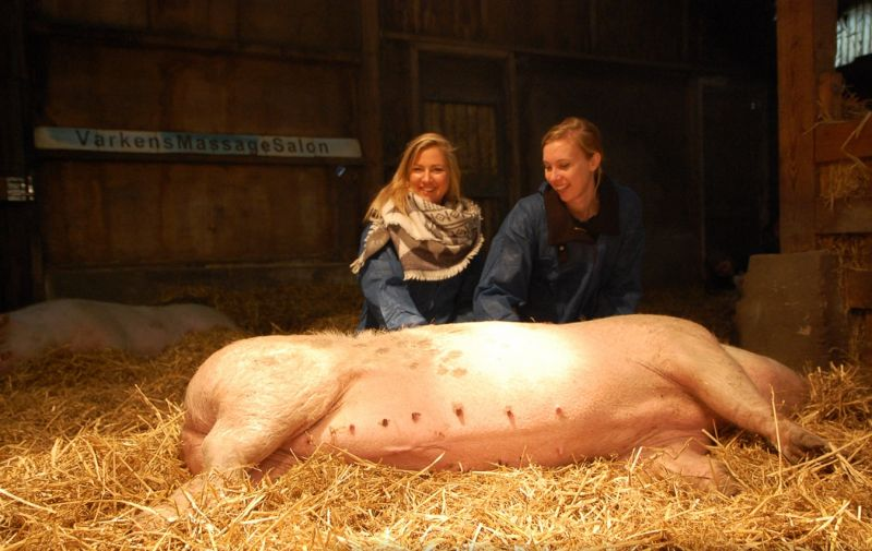 Дом престарелых для свиней
