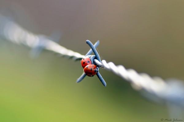 Изящные макрофотографии забавных насекомых