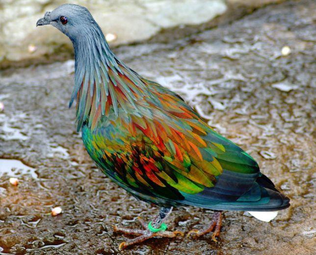 Необычные животные с удивительной окраской