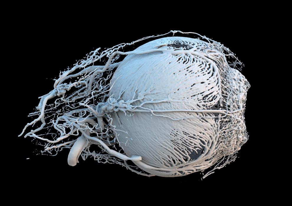 Победители конкурса фотографии в области биомедицины Wellcome Image Awards 2017