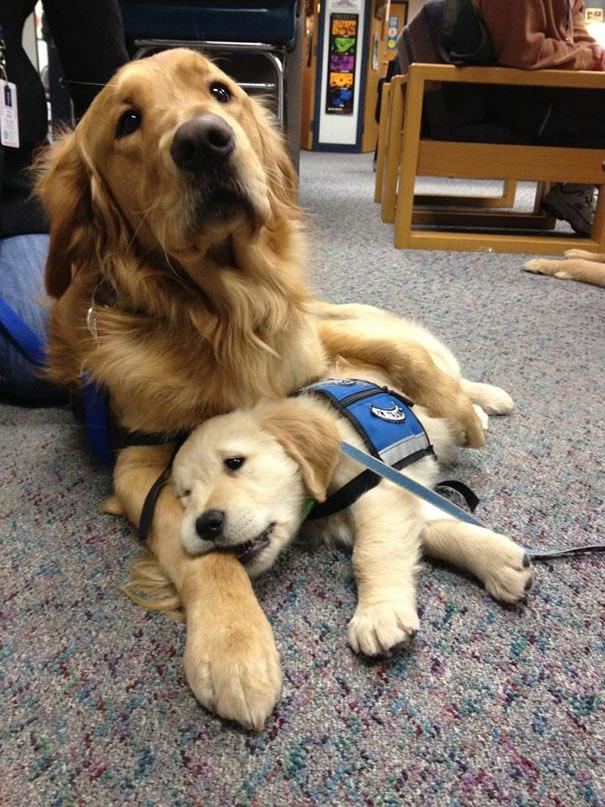 Служебные собаки в первый рабочий день