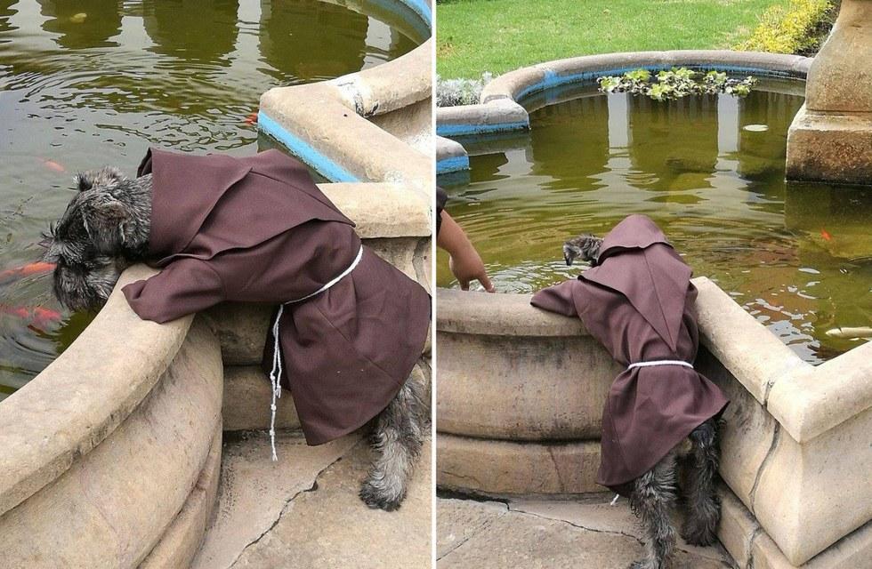Бродячий песик вступил в ряды монахов боливийского монастыря
