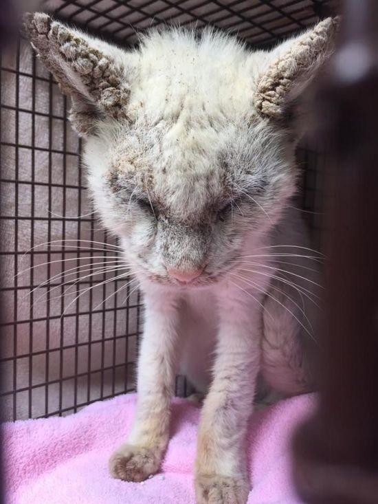 Бездомный кот, которого подобрали на улице, удивил всех красотой своих глаз