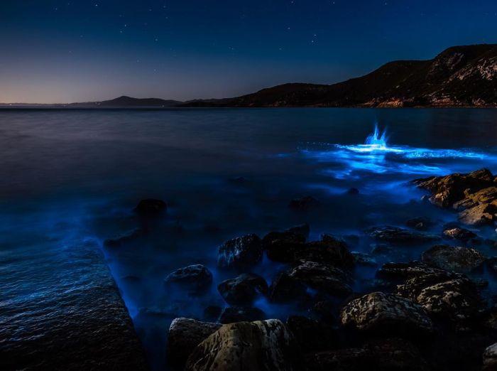 Биолюминесцентные водоросли у берегов Тасмании