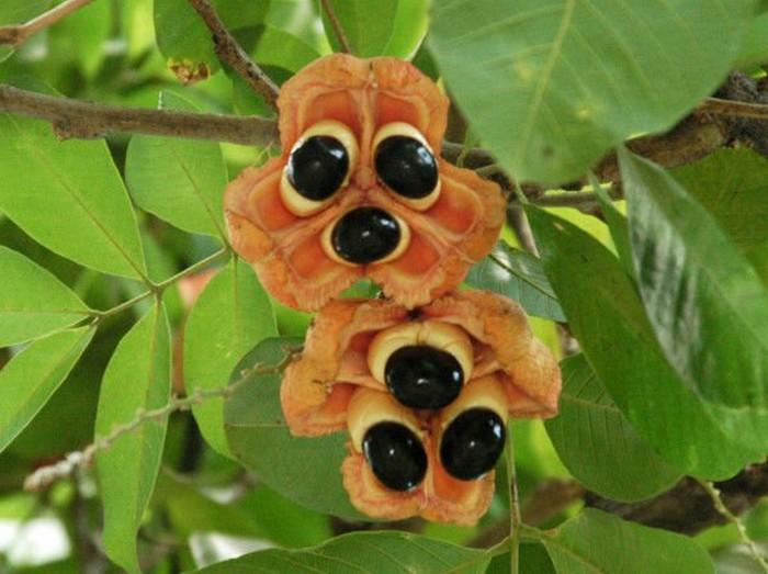 10 невероятных экзотических фруктов, которые стоит попробовать