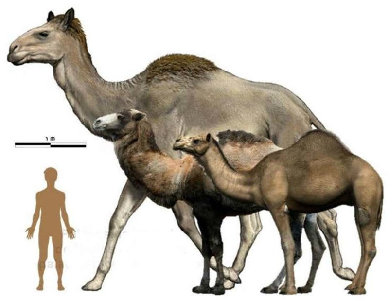 Животные-великаны, когда-либо населявшие Землю