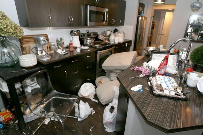 Арендаторы разгромили съемный дом за три дня