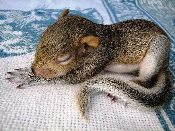Милые спящие животные на фотографиях