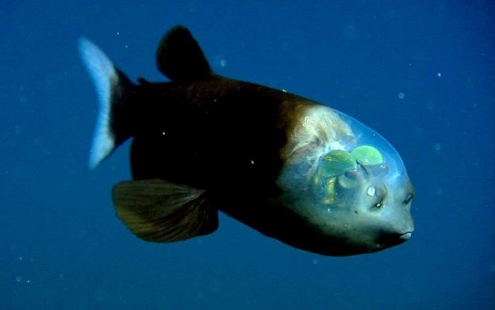 Самые таинственные создания океанических глубин