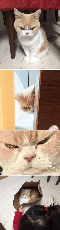 Коты, которые замышляют что-то тёмное