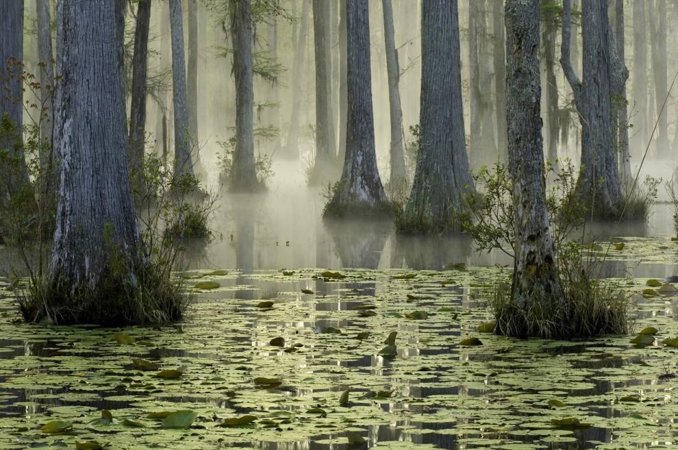 15 самых красивых лесов планеты