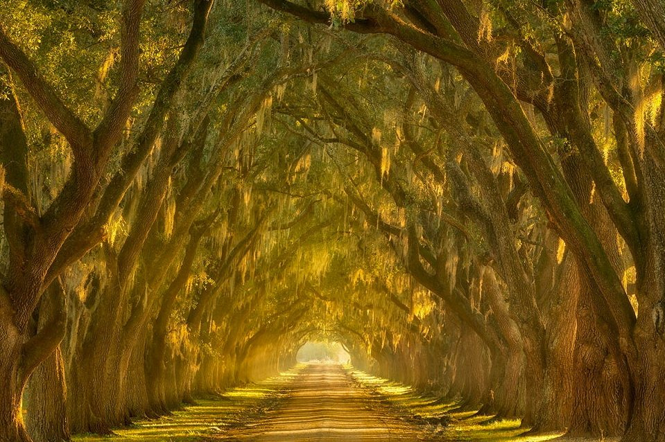 Потрясающие природные туннели со всего мира