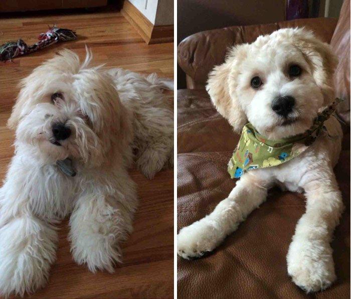 Собаки до и после стрижки