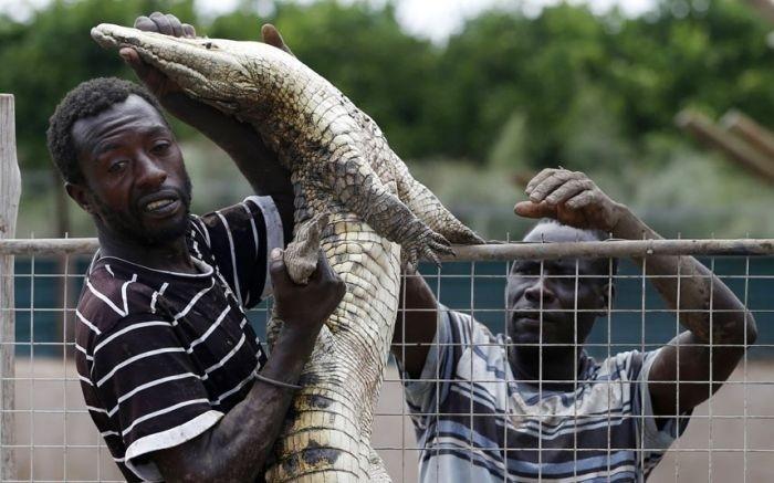 15 000 крокодилов в ЮАР терроризируют местных жителей