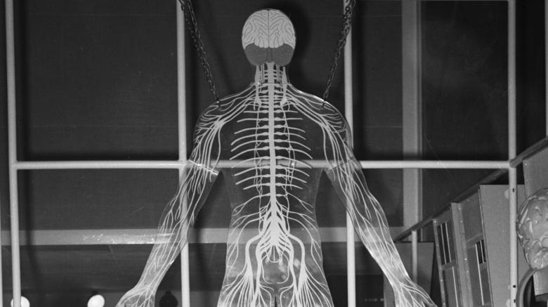 Странные способности нашего тела