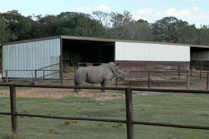 В США продают зоопарк за 7 миллионов долларов