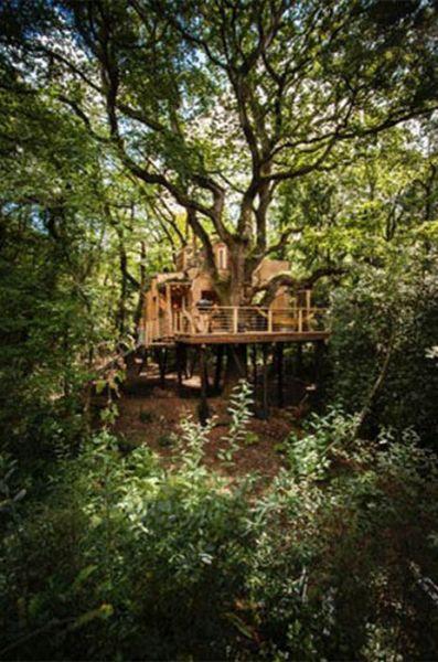 Гостевой домик на дереве