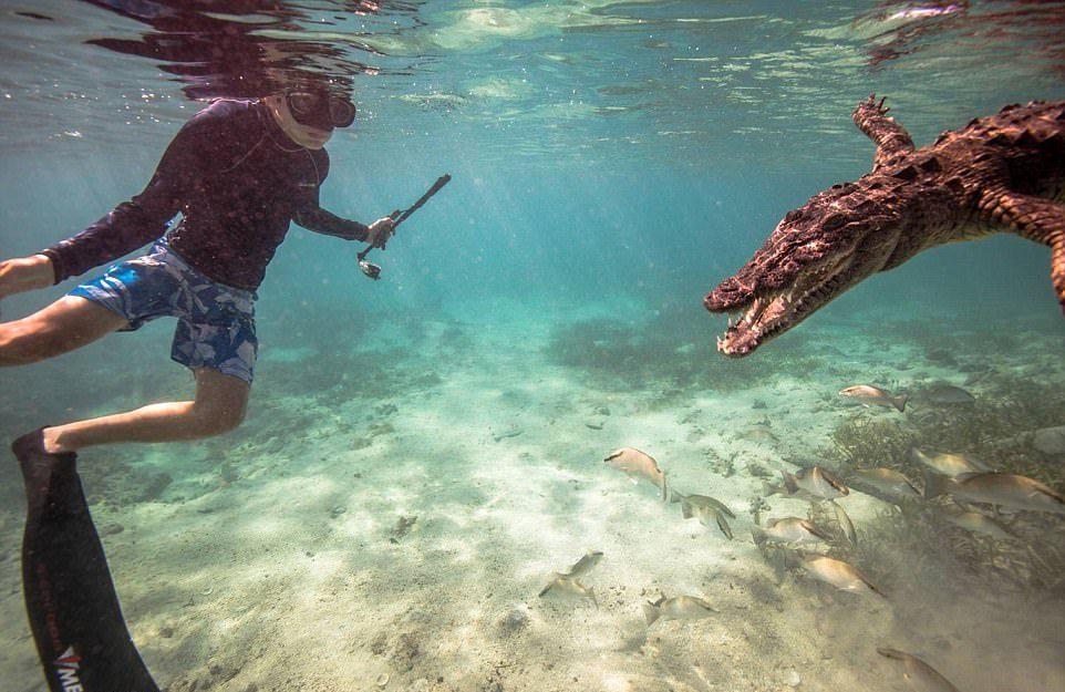 Подарок на 14-летие: плавание с крокодилами