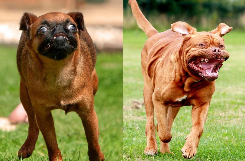 Смешные бегущие собаки на фотографиях Ника Ридли