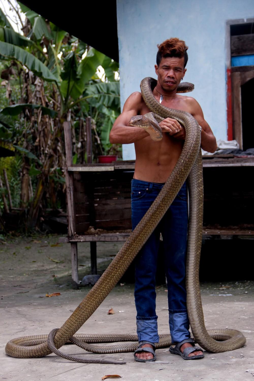 самая большая кобра фото