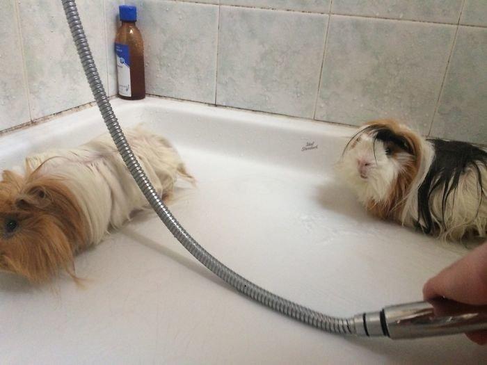 Фото домашних любимцев во время купания