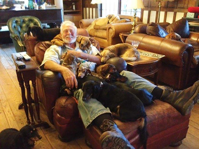 Когда в доме живёт более двух собак