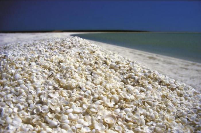 Пляж из ракушек