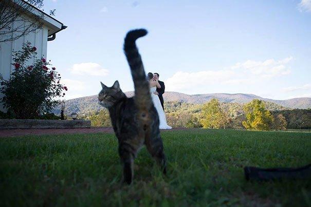 Крутые фотобомбы от котов