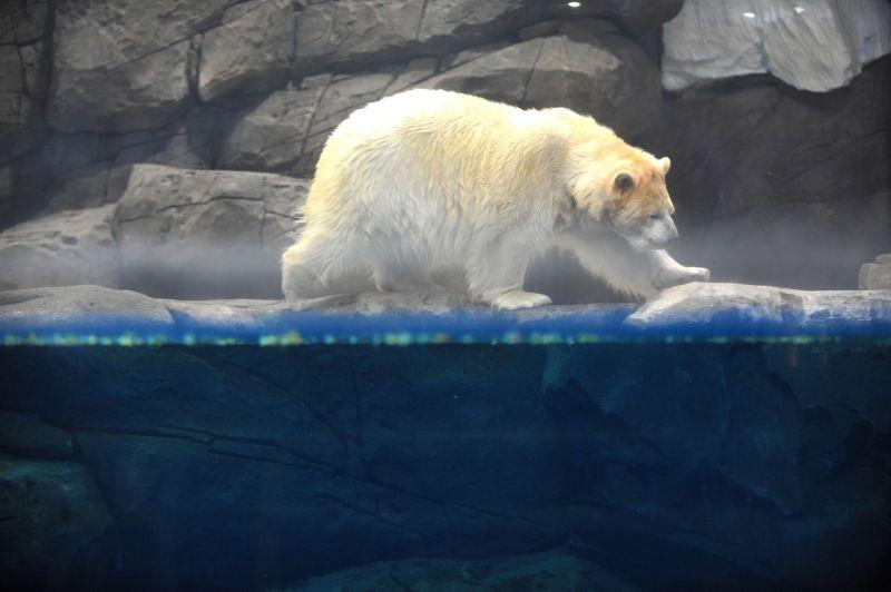 Посетители китайского зоопарка платят, чтобы убирать за медведем