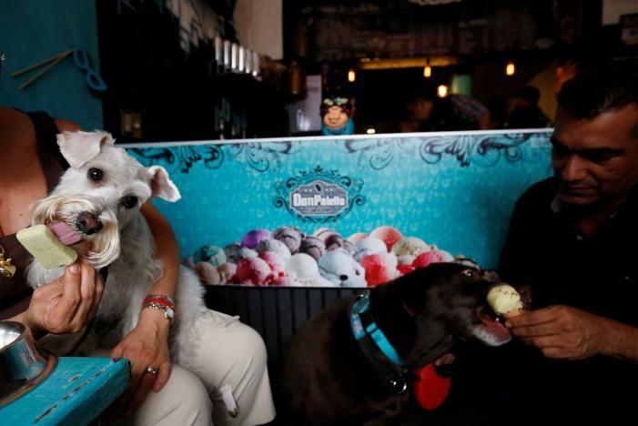 Мексиканский магазинчик с мороженым для собак