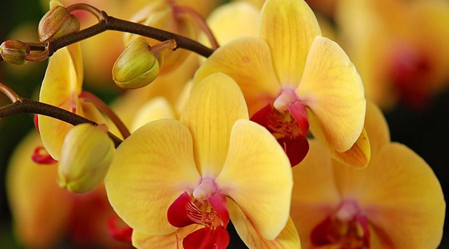 Комнатные цветы, которые могут навредить