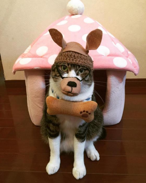Терпеливый котик - идеальная модель для фотосессии