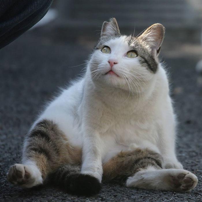 Фотографии бездомных котов Токио