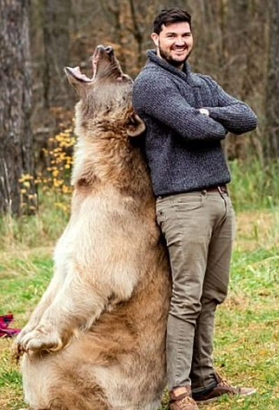 Фотосессия с медведем в лесу