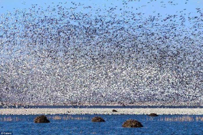 Как выглядит миллион птиц