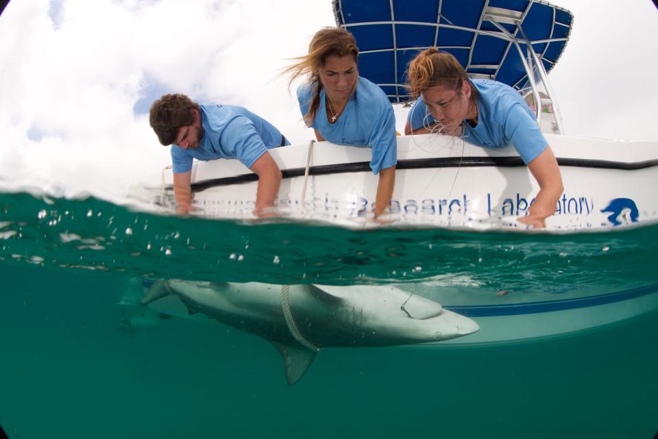 Тысячи акул мигрируют вдоль побережья Флориды