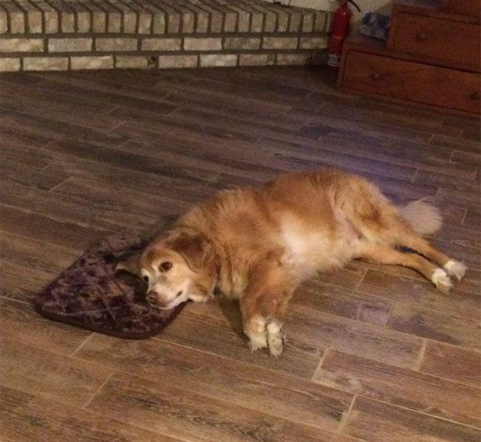 Женщина заказала маленькую подстилку, но пес не подал виду