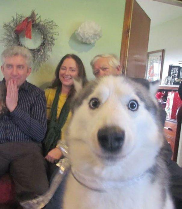 Крутые фотобомбы с собаками