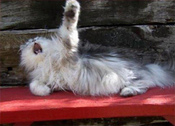 Драматичные кошки, достойные Оскара