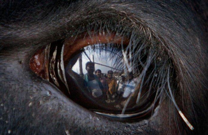 Глаза животных