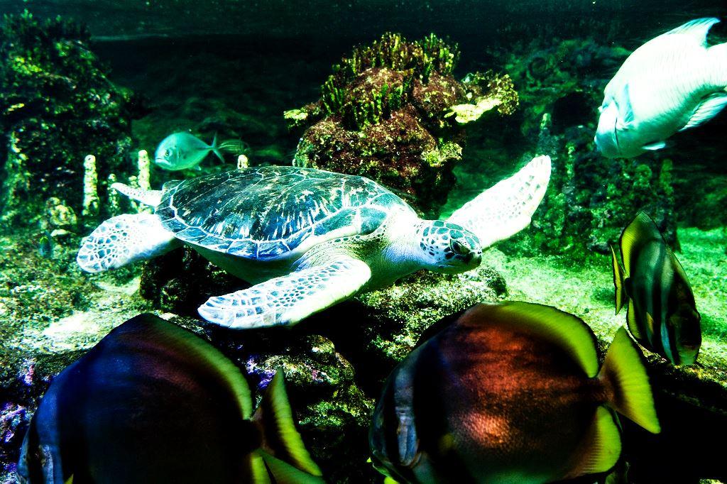 Самые популярные океанариумы мира