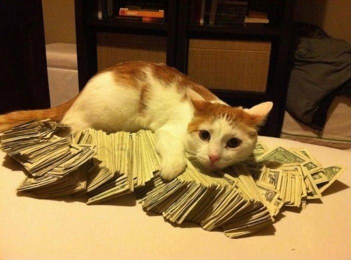 Когда у людей слишком много денег