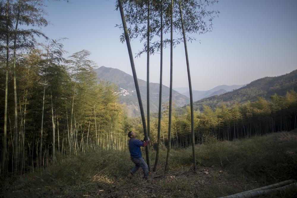 Бамбуковый бизнес в Китае