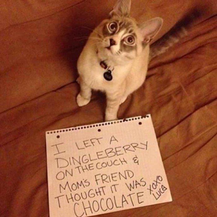 Коты и кошки: пойманы с поличным