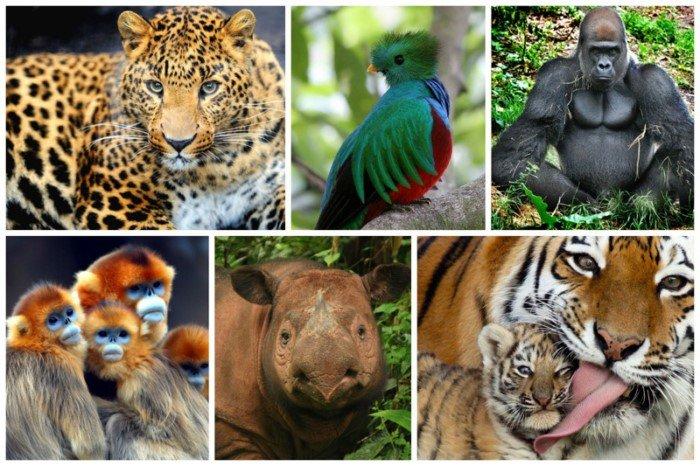 Животные и растения на грани исчезновения