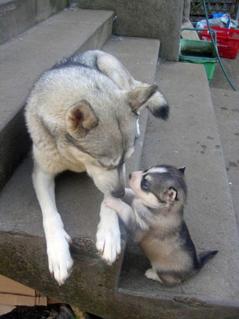 Мамы и их детки из мира животных