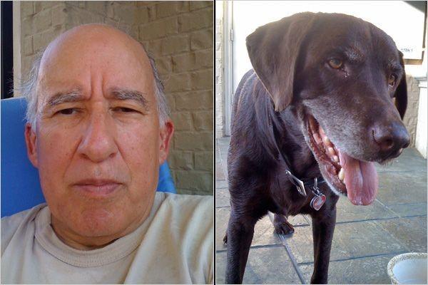 Собаки похожи на своих владельцев