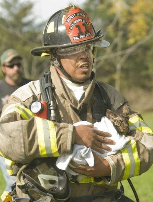 Пожарные и спасенные ими животные